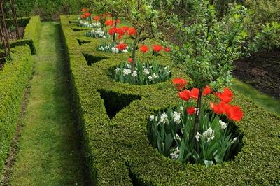 c j zonneveld zonen b v darwin hybrid lighting sun tulipa