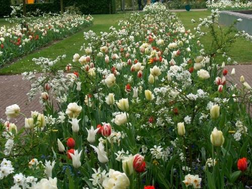C j zonneveld zonen b v lily flowered white for Cj garden designs